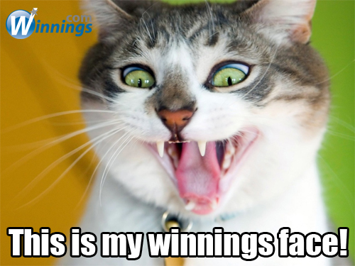 Winning Cat Face
